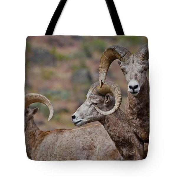Rams In Three Tote Bag