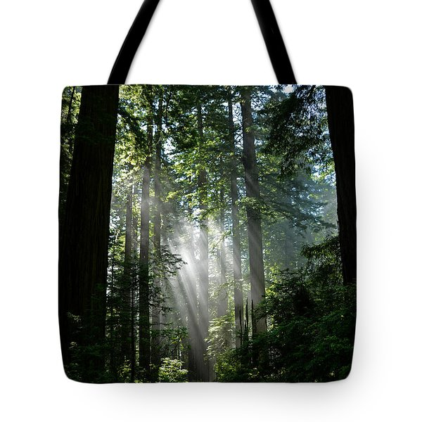 Rays In Redwoods Tote Bag