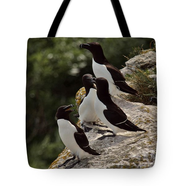 Razorbill Cliff Tote Bag by Dreamland Media
