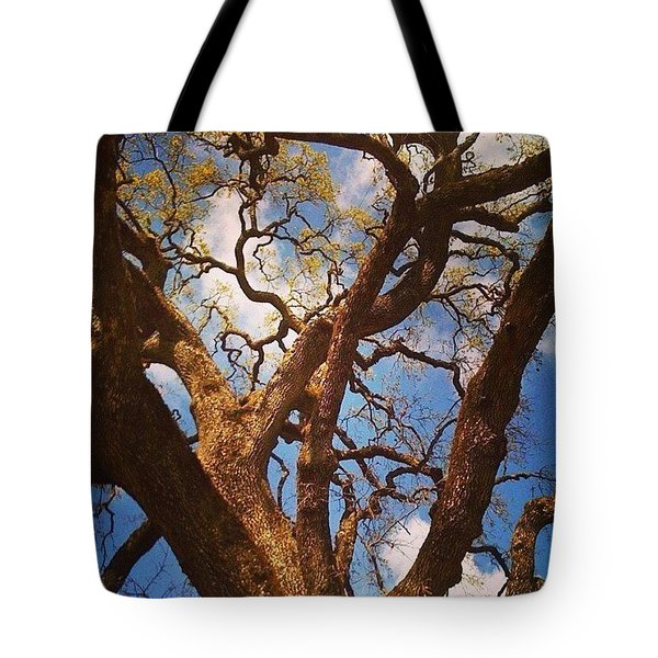 Picnic Under The Giant Oak Tree Tote Bag