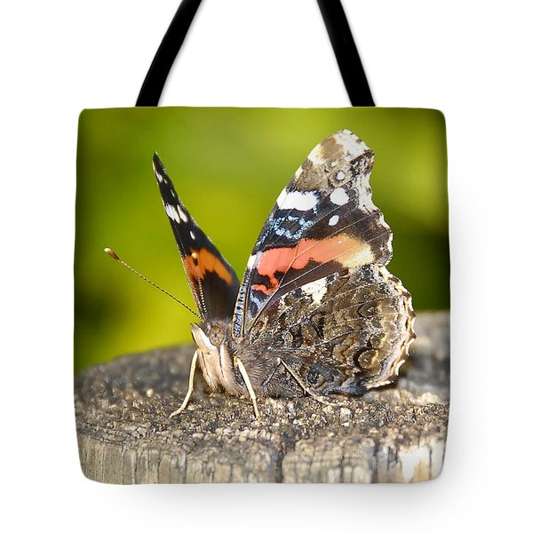 Red Admiral Butterfly Tote Bag by David Lee Thompson