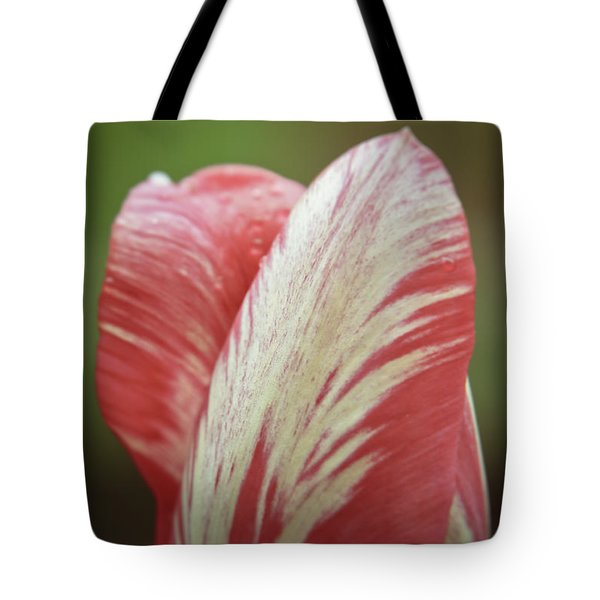 Red And White Tulip Bud Close-up Tote Bag