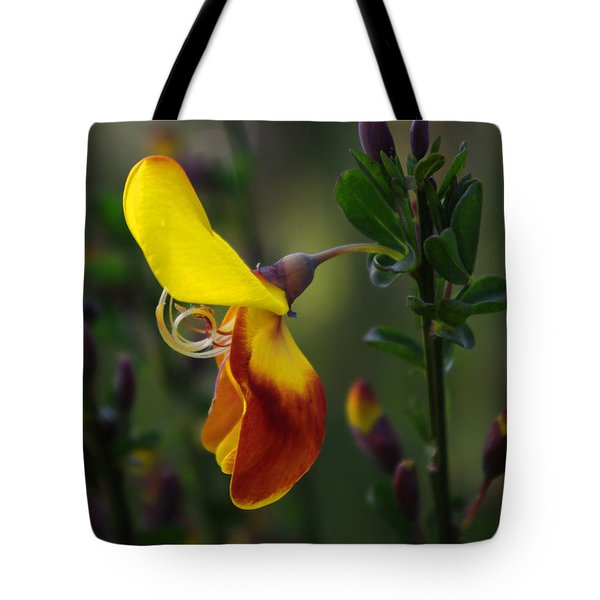 Red And Yellow Scotchbroom Tote Bag by Adria Trail