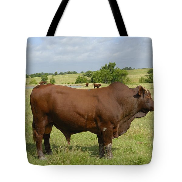 Red Angus Bull Tote Bag