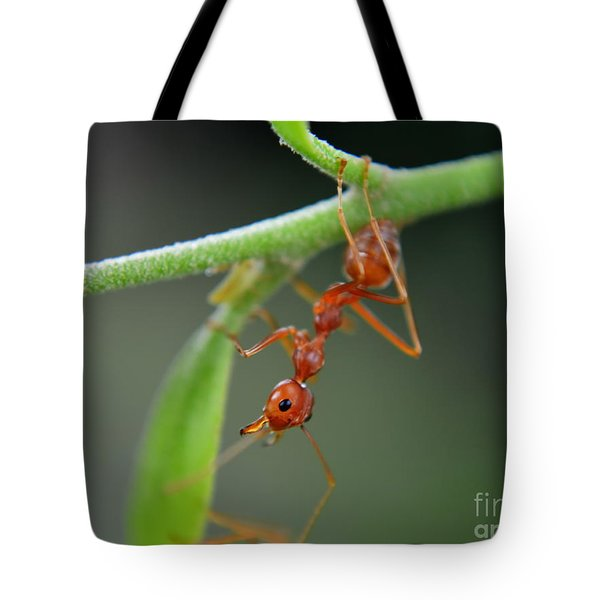 Red Ant Tote Bag by Michelle Meenawong
