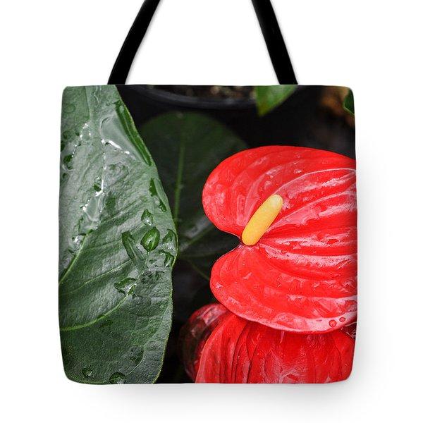 Red Anthurium Flower Tote Bag by Denise Bird