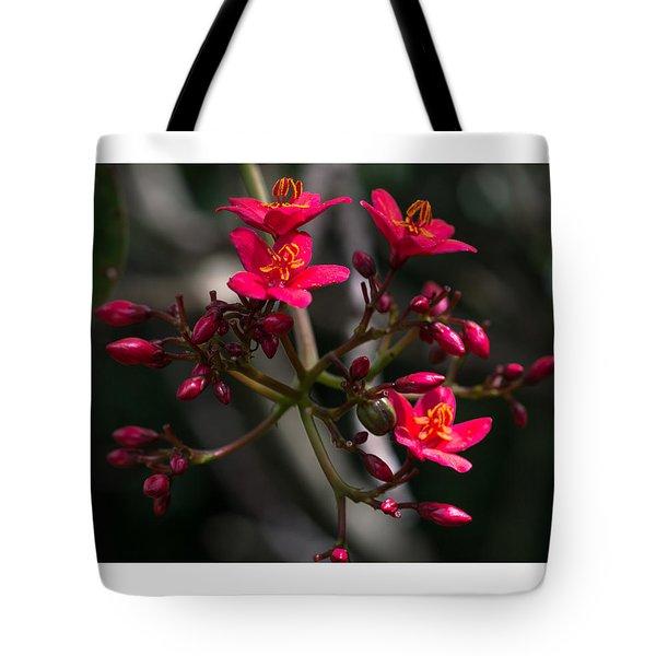 Red Jatropha Blossoms Tote Bag