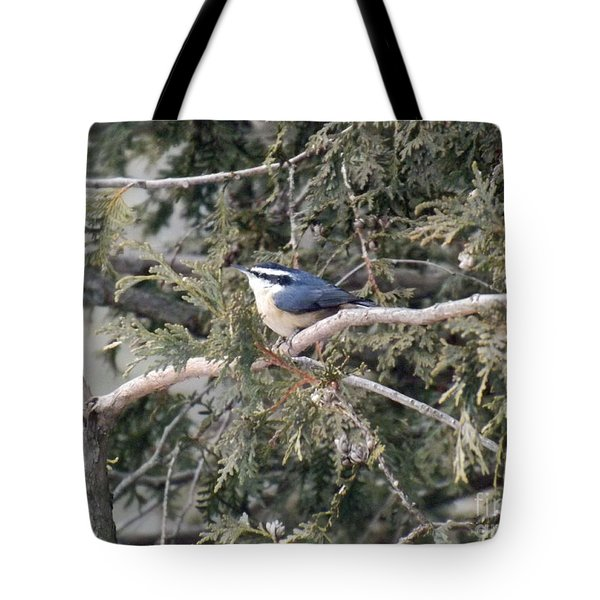 Tote Bag featuring the photograph Red Breasted Nuthatch by Brenda Brown