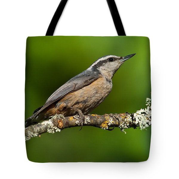 Red Breasted Nuthatch In A Tree Tote Bag