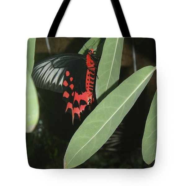 Tote Bag featuring the photograph Red Butterfly by Robert Nickologianis