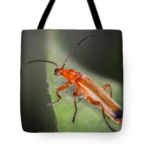 Red Cardinal Beetle Tote Bag