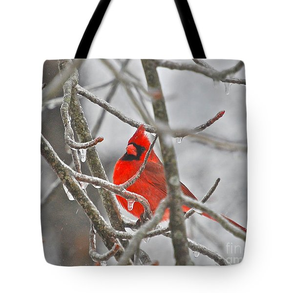 Red Cardinal Northern Bird Tote Bag