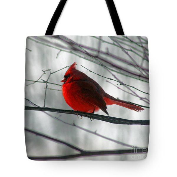 Red Cardinal On Winter Branch  Tote Bag
