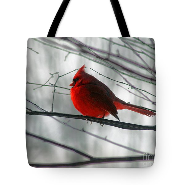 Red Cardinal On Winter Branch  Tote Bag by Karen Adams