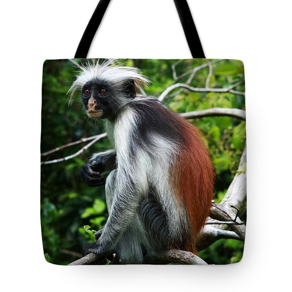 Red Colobus Monkey Tote Bag by Aidan Moran