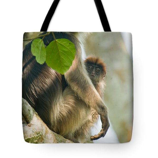 Red Colobus Monkey With Its Young One Tote Bag