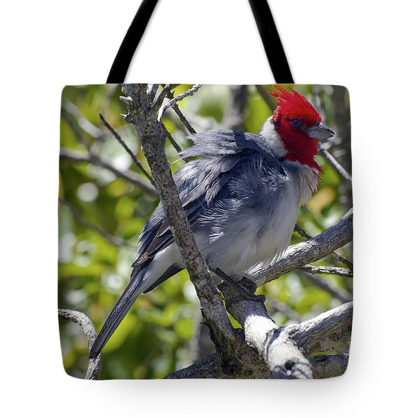 Red Crested Cardinal Tote Bag by Bob Phillips