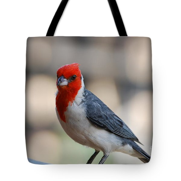 Red Crested Cardinal Tote Bag by DejaVu Designs