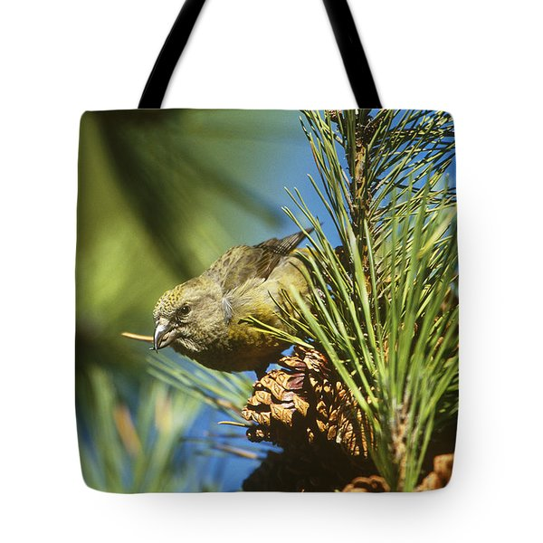 Red Crossbill Eating Cone Seeds Tote Bag