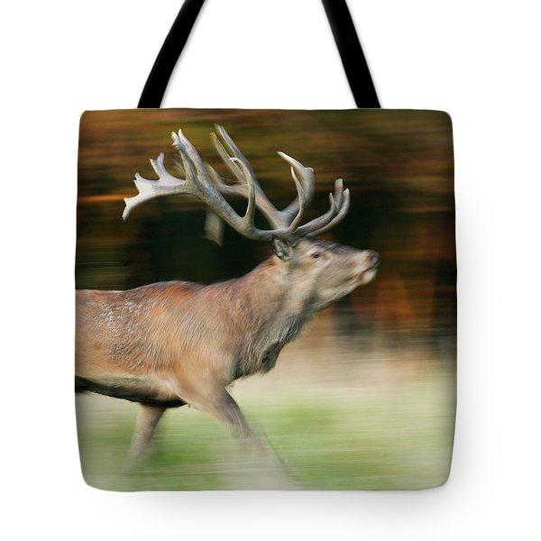 Red Deer Cervus Elaphus Stag Running Tote Bag by Cyril Ruoso