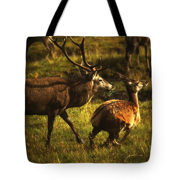 Tote Bag featuring the photograph Red Deer Stag And Hind by Phil Banks