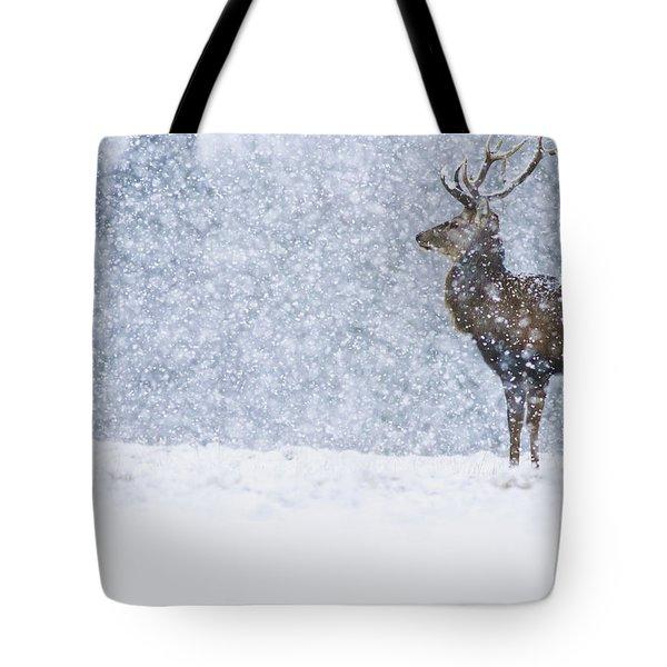Red Deer Stag In Snowfall Derbyshire Uk Tote Bag
