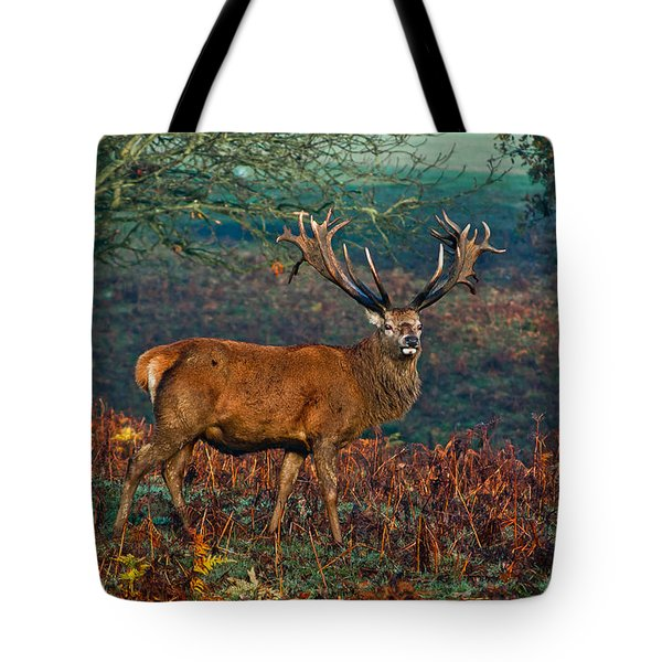 Red Deer Stag In Woodland Tote Bag