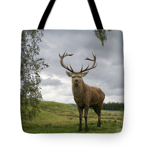 Tote Bag featuring the photograph Red Deer Stag by Phil Banks