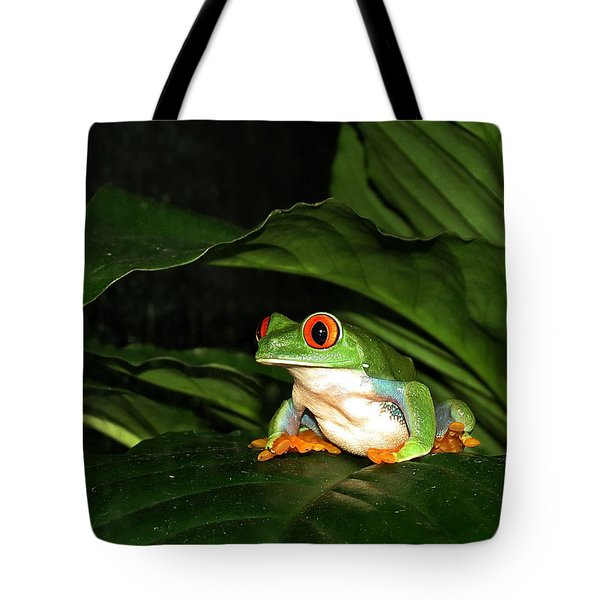 Red Eyed Green Tree Frog Tote Bag by MTBobbins Photography