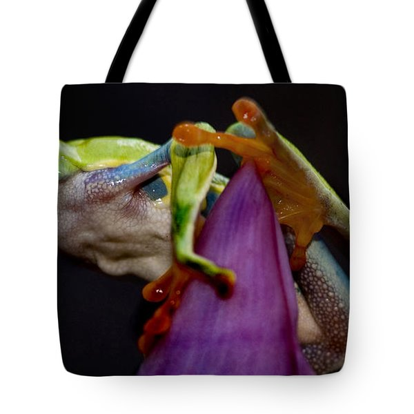 Red Eyed Tree Frog Tote Bag by Bob Christopher
