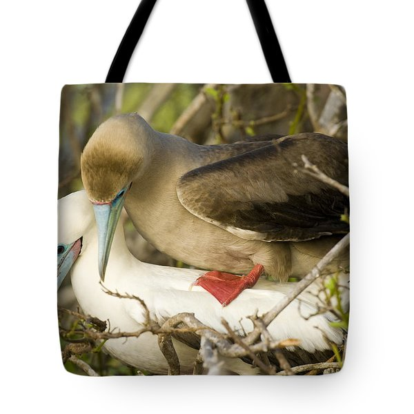 Red-footed Boobies Mating Tote Bag