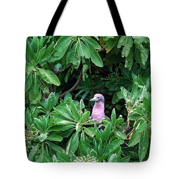 Red Footed Booby Sula Sula Tote Bag