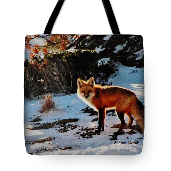 Red Fox In Winter Tote Bag by Diane Alexander