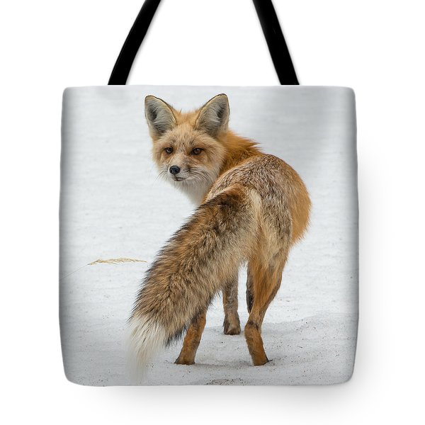 Tote Bag featuring the photograph Red Fox Of Silver Gate by Yeates Photography