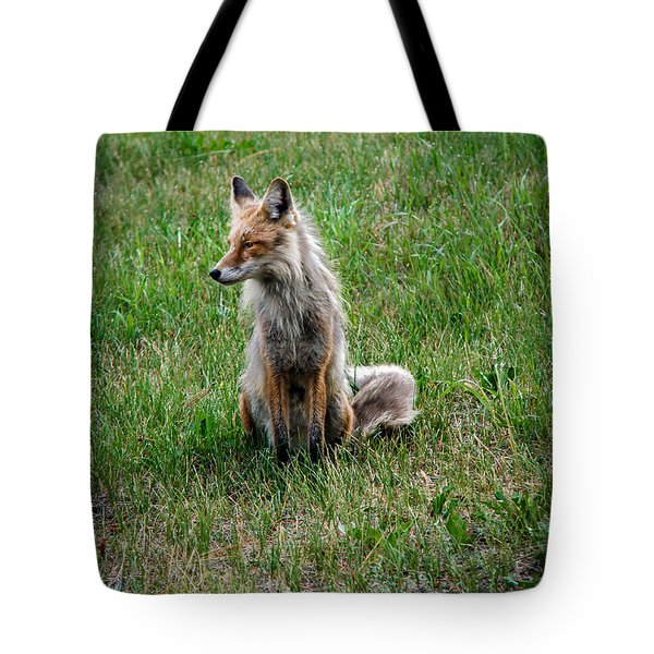Red Fox Portrait Tote Bag by Robert Bales