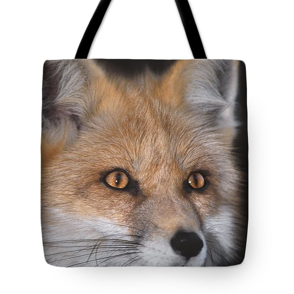 Tote Bag featuring the photograph Red Fox Portrait Wildlife Rescue by Dave Welling
