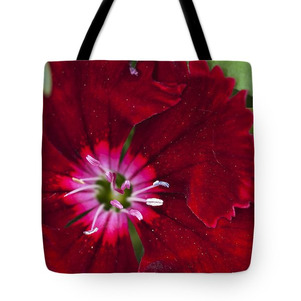 Red Geranium 1 Tote Bag by Steve Purnell