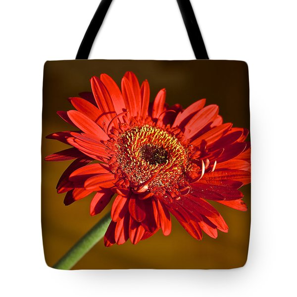 Red Gerbera Tote Bag by Venetia Featherstone-Witty