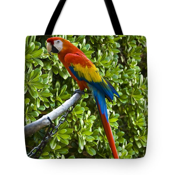 Red-green Macaw Tote Bag
