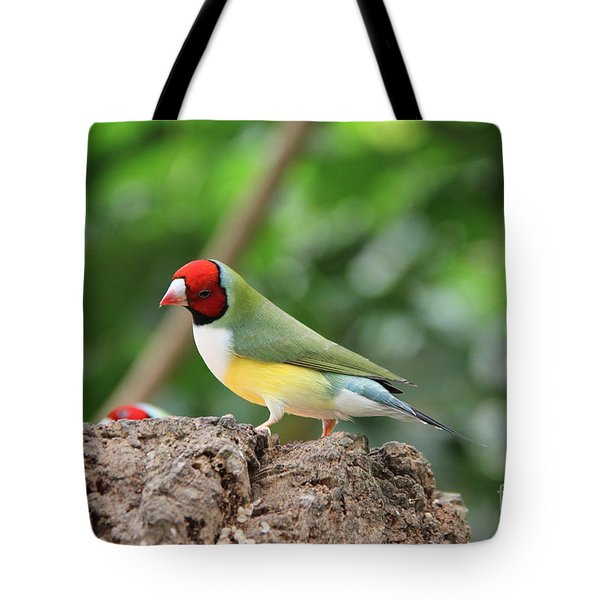 Red Headed Gouldian Finch Tote Bag