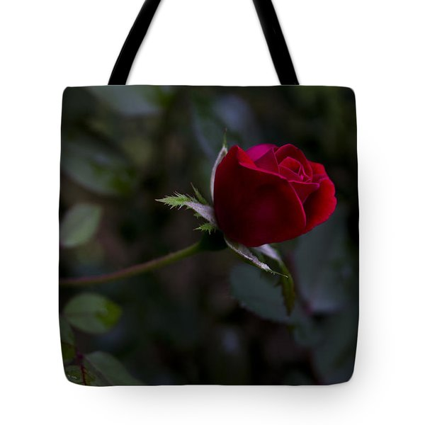 Tote Bag featuring the photograph Red Knockout Rose by Ben Shields