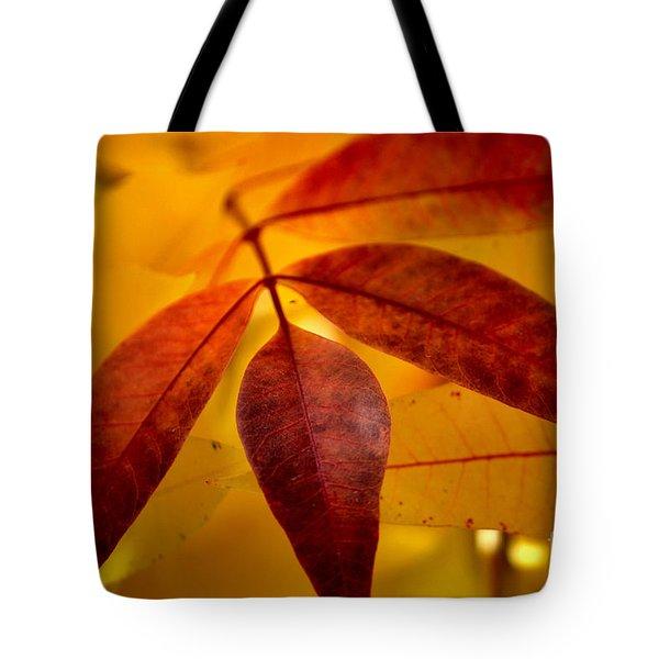 Red Leaves At Dawn Tote Bag by Deb Halloran