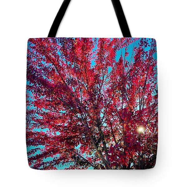 Red Maple Tree, Afternoon Light Tote Bag