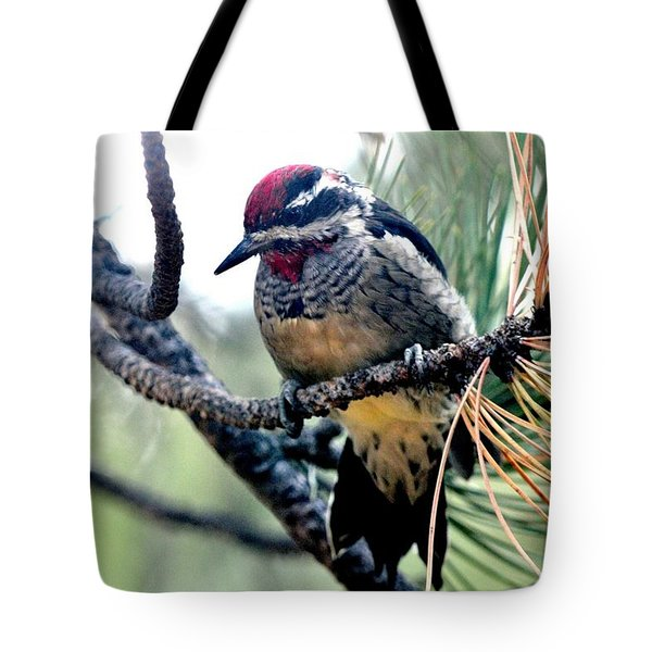 Red-naped Sapsucker On Pine Tree Tote Bag