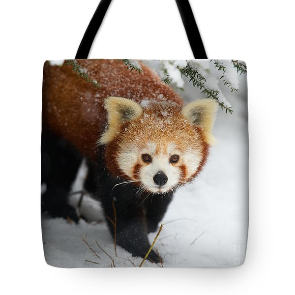 Red Panda In The Snow Tote Bag