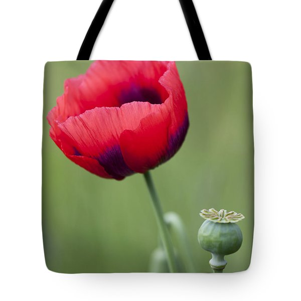 Red Poppy Tote Bag