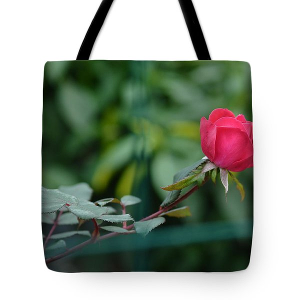 Tote Bag featuring the photograph Red Rose I by Lisa Phillips