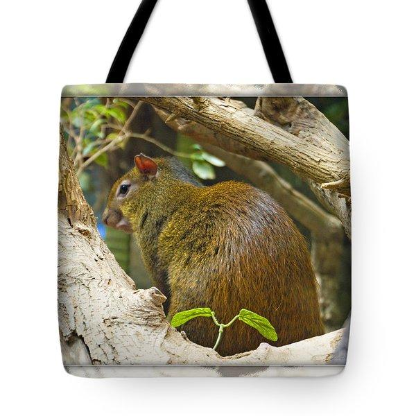 Red-rumped Agouti Tote Bag