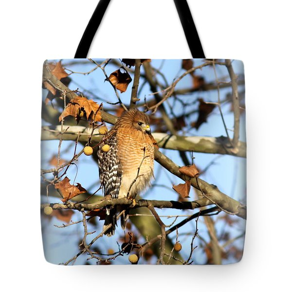 Red-shouldered Hawk - Img_7943 Tote Bag
