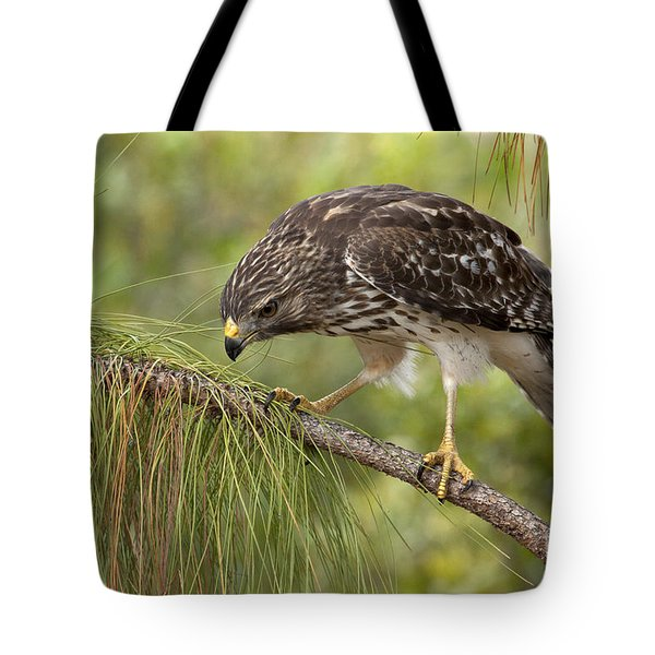 Red Shouldered Hawk Photo Tote Bag